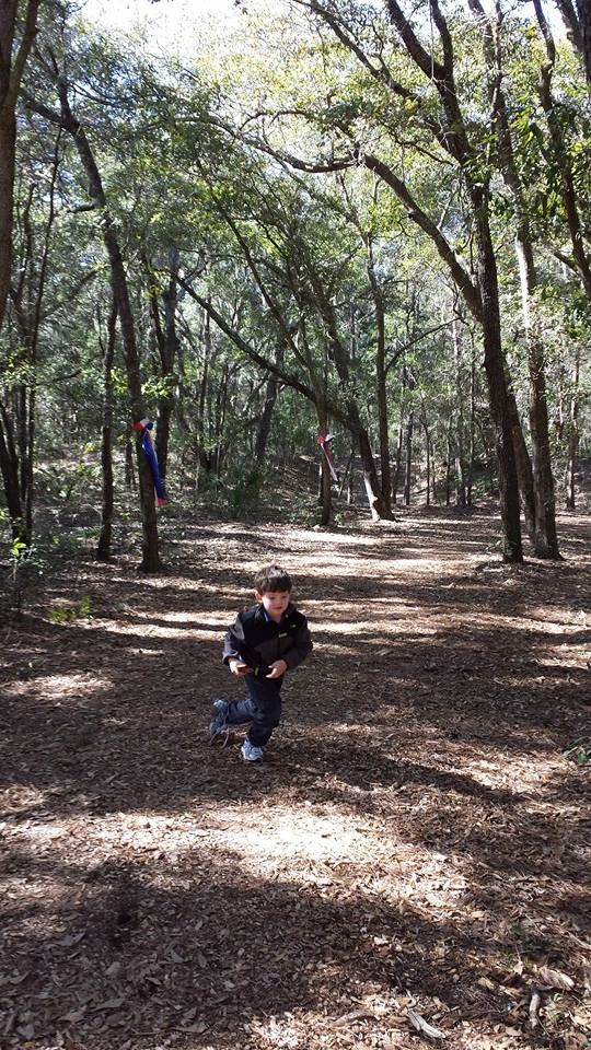 Gray running at Fort Howell on Hilton Head Island
