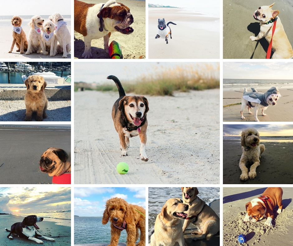 Have a pet-friendly vacation on Hilton Head Island,