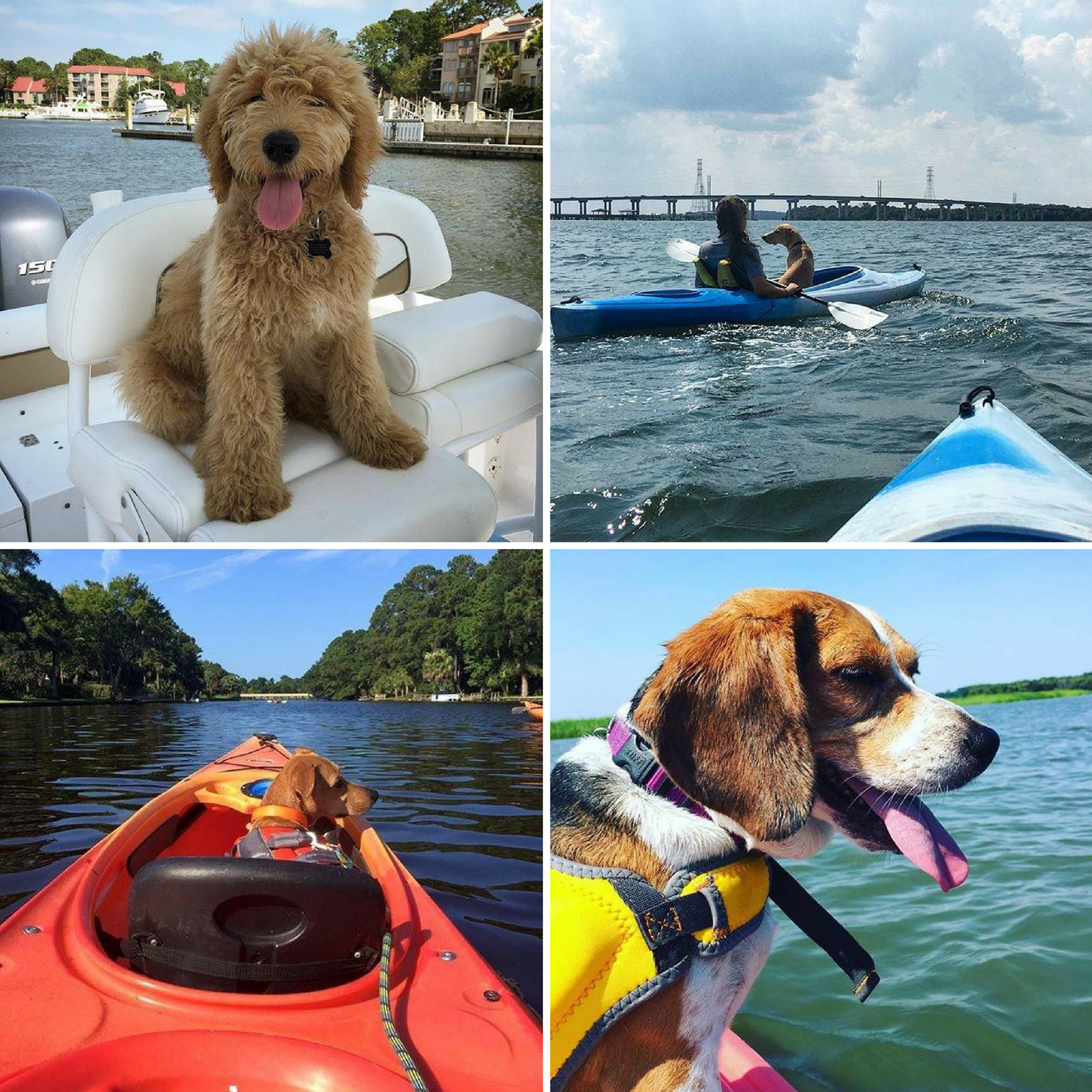how to have a dog friendly vacation on hilton head island