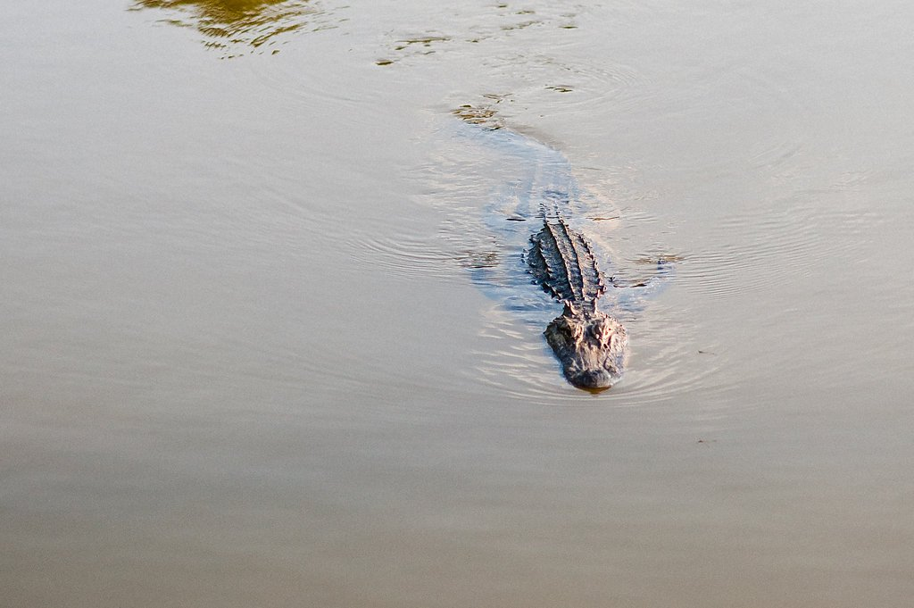 Discover the incredible wildlife of Lowcountry on your next vacation!
