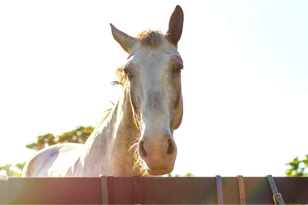 Horse behind a fence in Hilton Head Island's Lawton Stables