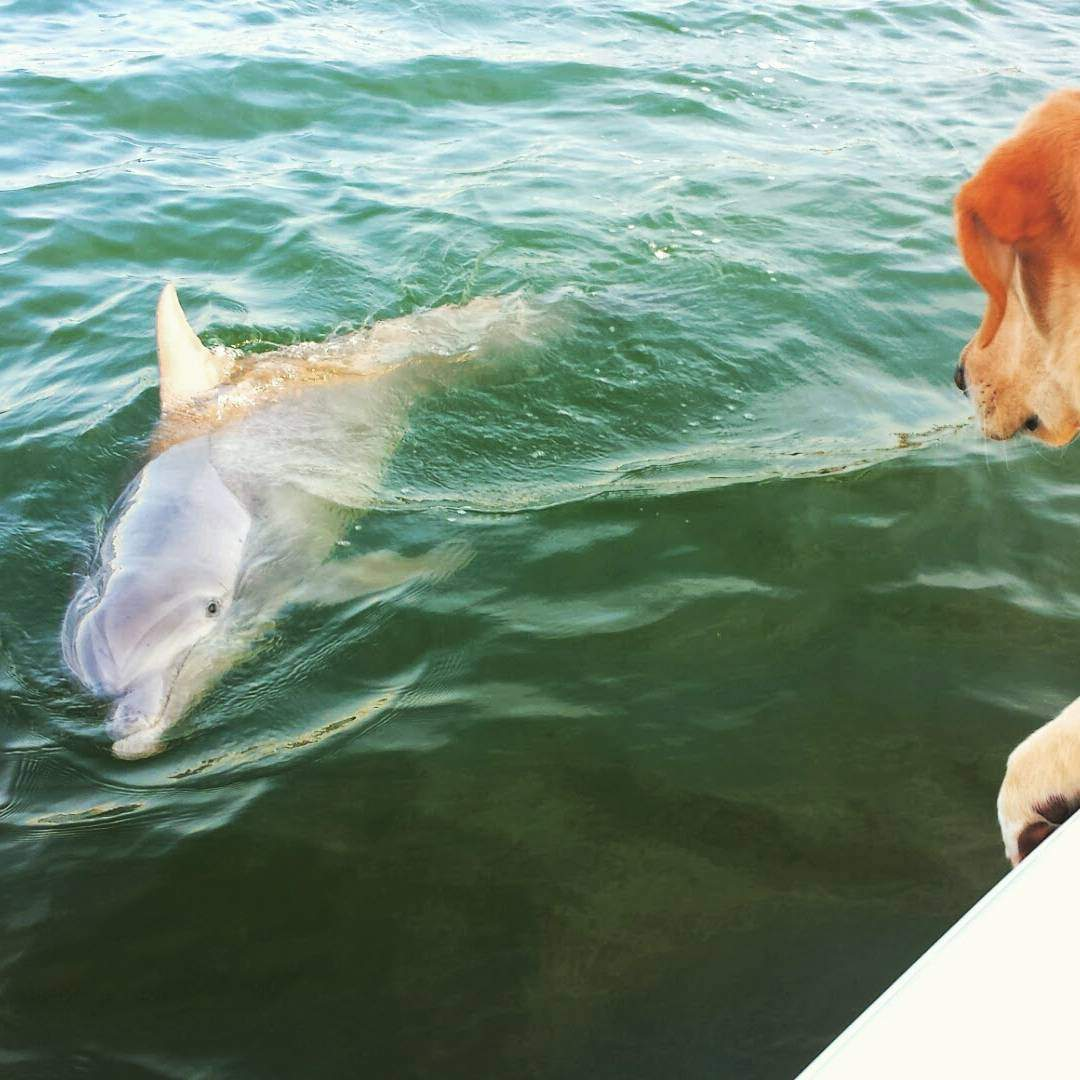 Dog Meets Dolphin on Hilton Head Island