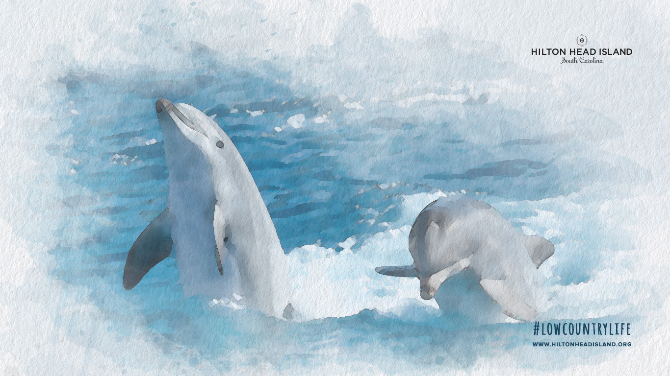 1366x768 dolphin background