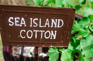 Sign for Sea Island Cotton