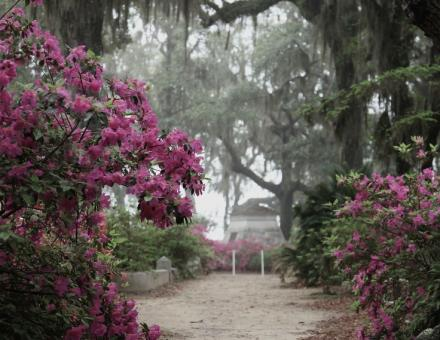 Bonaventure Cemetery is one of the most beautiful cemeteries in the whole world. Rich with history, it is a not to be missed activity in Savannah Georgia!