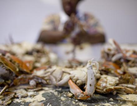 A woman cleaning crabs.