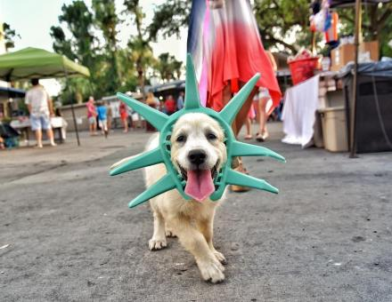 Dog dressed up for Fourth of July