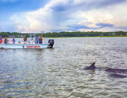 Island Explorer Dolphin & Nature Tours - see dolphins up close
