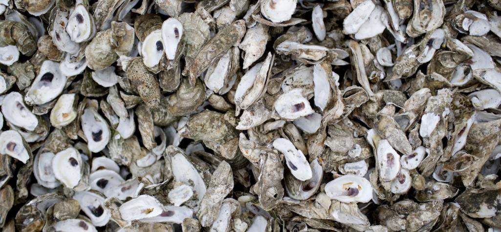Dating oyster shells