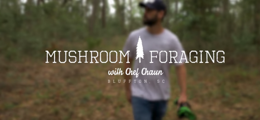 Mushroom foraging with Chef Shaun.