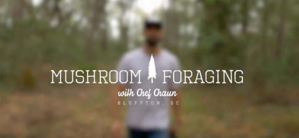 Mushroom Foraging with Chef Chaun