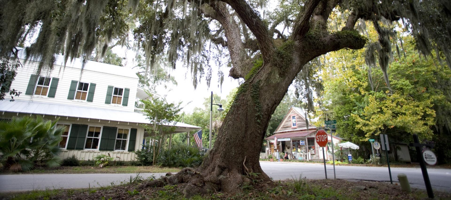tree on bluffton street