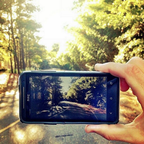 road lined with tree with someone taking a picture
