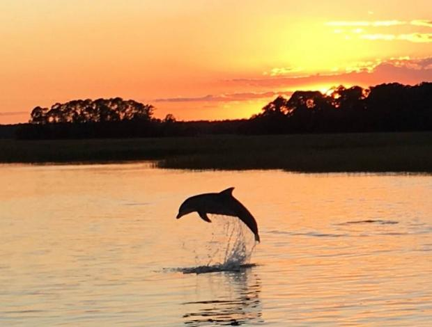 Everything You Need To Know About Hilton Head S Dolphins