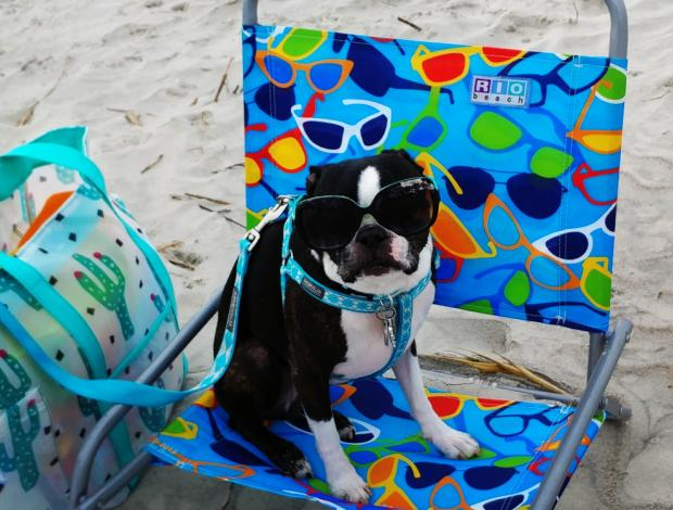 Pup friendly homes and villas on Hilton Head Island!