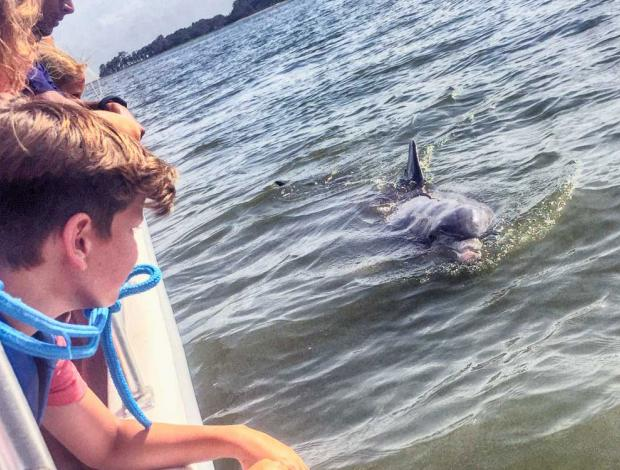 See dolphins up close on Island Explorer Dolphin & Nature Tours