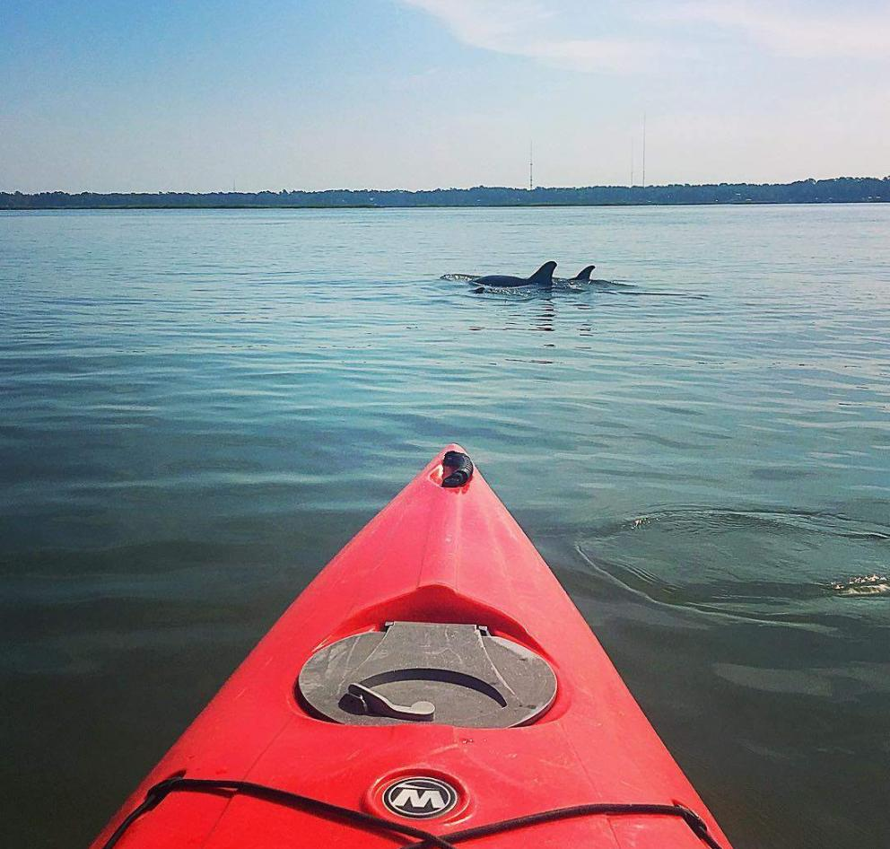 Dolphin spotted in a kayak off of Hilton Head Island