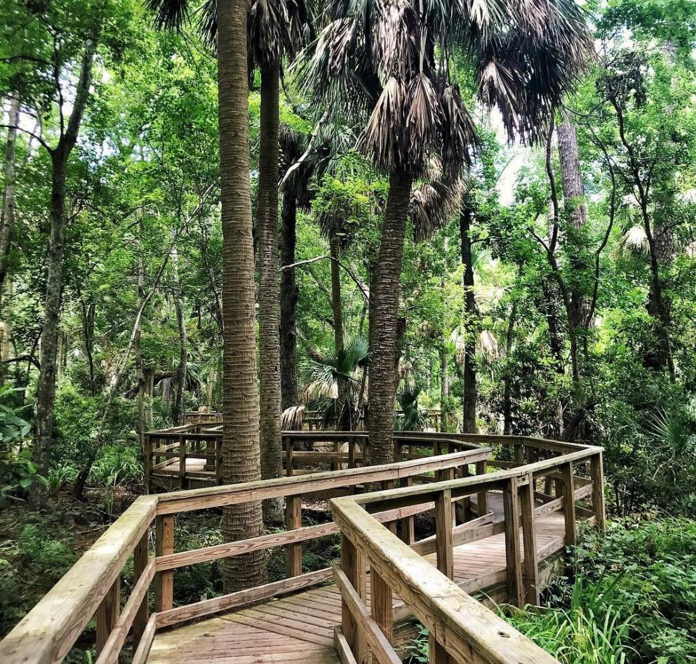 Boardwalk on a trail in the Sea Pines Forest Preserve