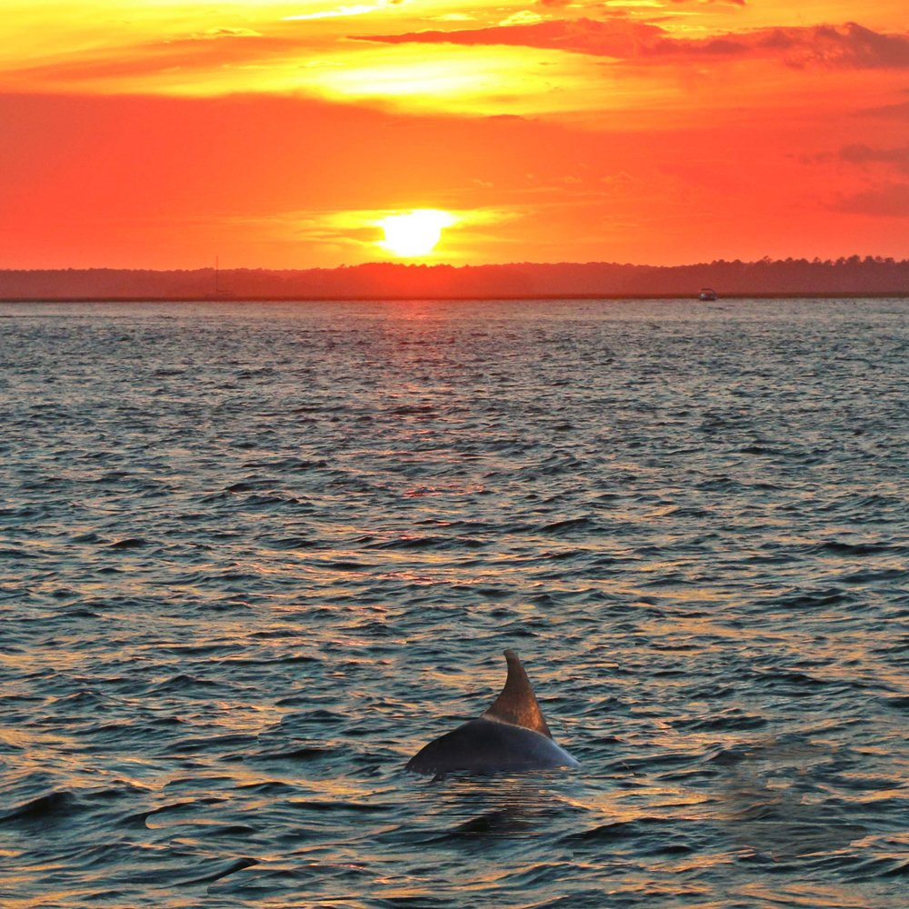 Sunset Dolphin Cruise