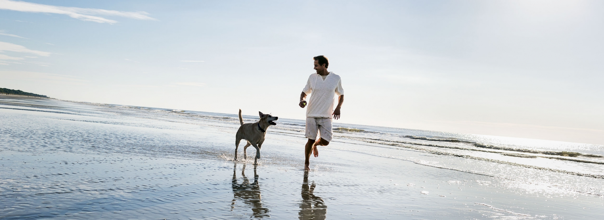 Dog Friendly Vacation Rentals Hilton Head Sc