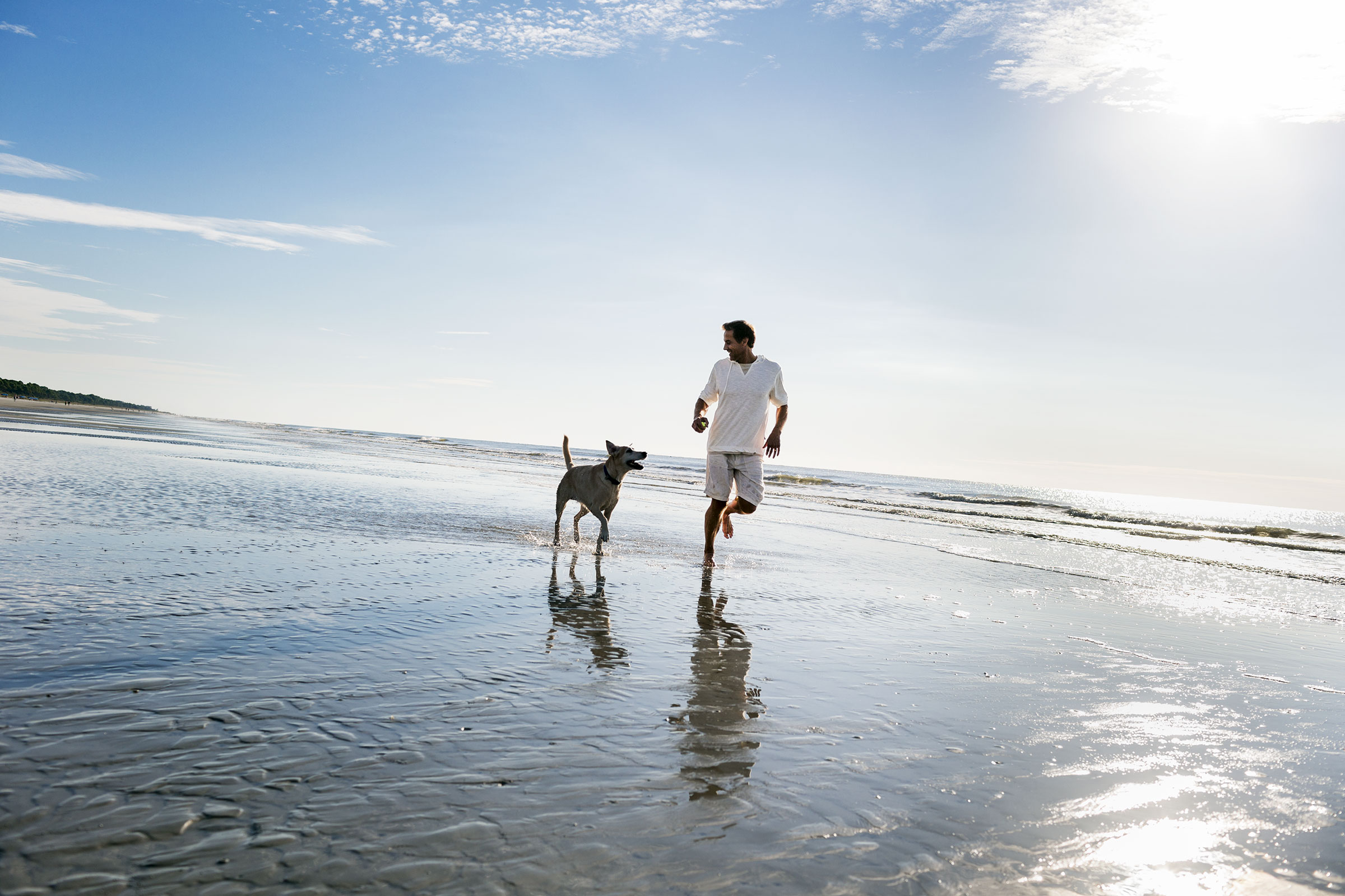 Dog Friendly Hotels Hilton Head Island Sc