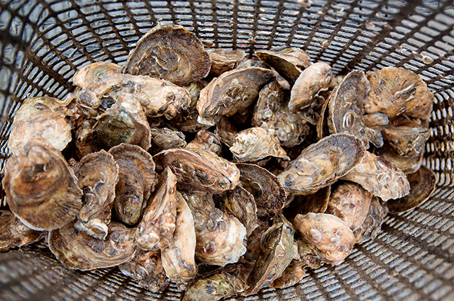 Shell Ring Oyster Company