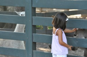 Young girl pets a donkey through the fence