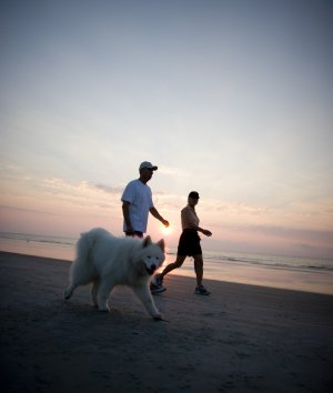 A couple walking along the beach with their dog at sunset